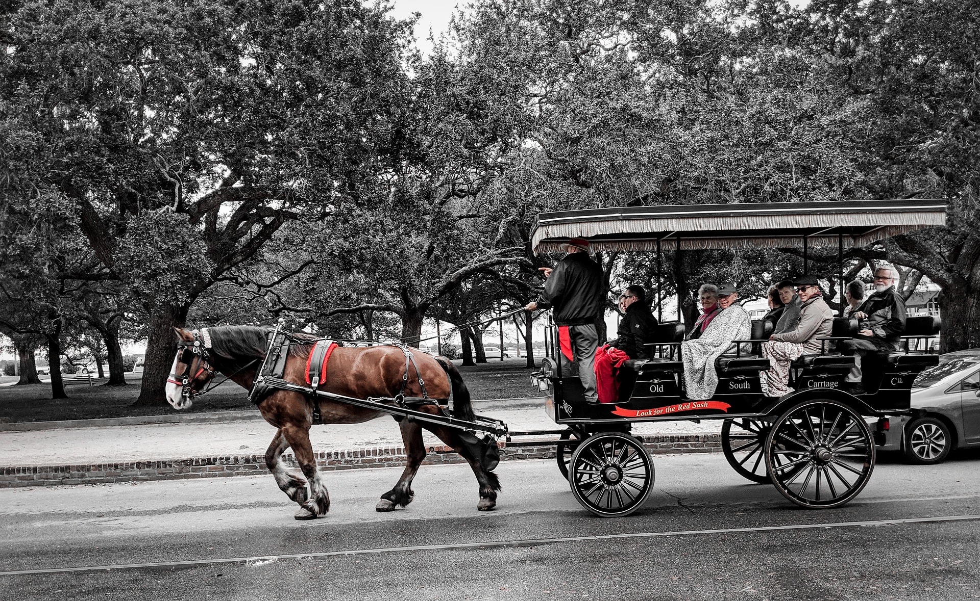 Horse And Buggy Ride